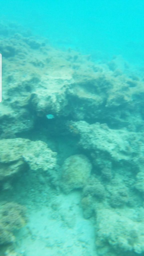 水中スマホケースではこのていど海の中の映り