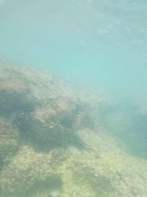 水中スマホケースでは海の中がきれいに映らない