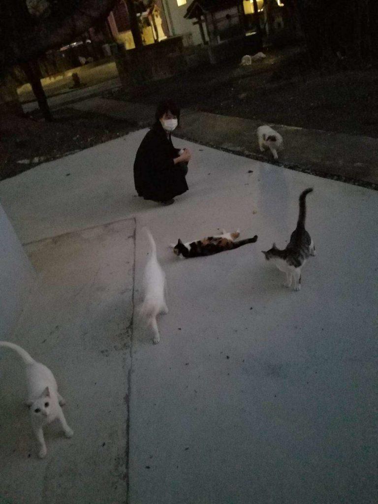 たくさんの白い猫とえん坊