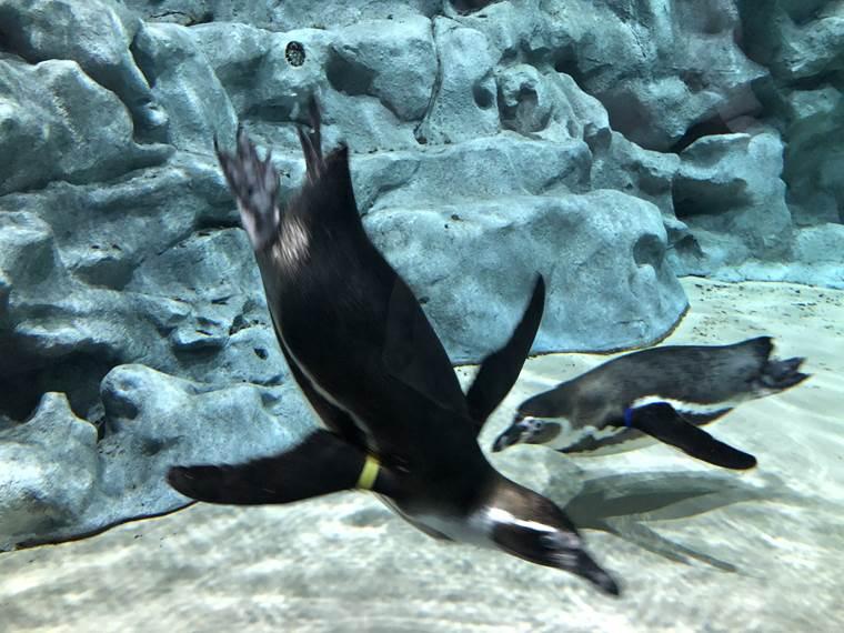 DMMかりゆし水族館15