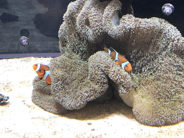 DMMかりゆし水族館16