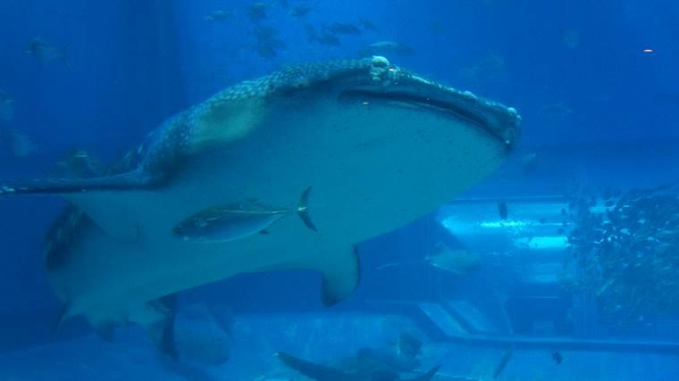 沖縄美ら海水族館10