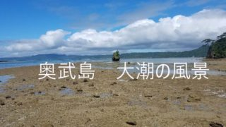 奥武島 磯遊び